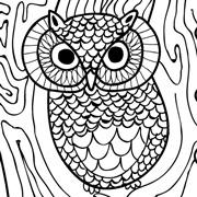 Owl-square